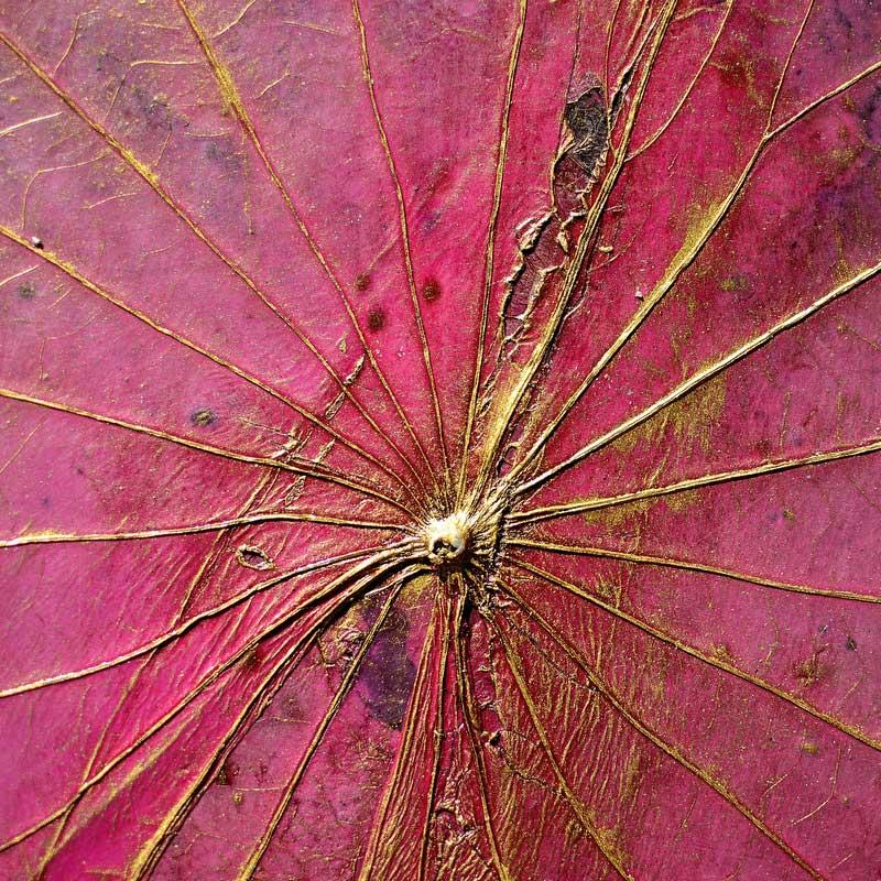 Die Adern des Lotusblatts mit Goldfarbe